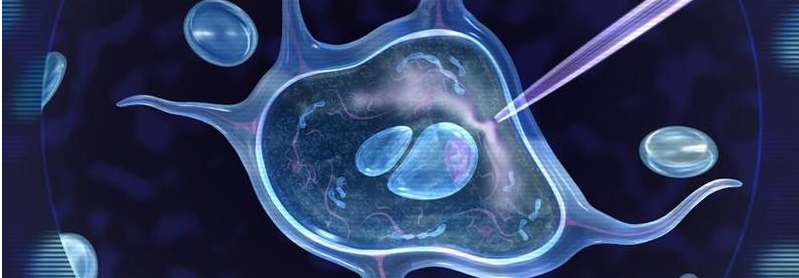 干细胞治疗获得重启,这些A股公司正在参与研究