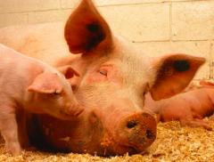 擬10億元投建肉制品數字智能產業基地 金字火腿加碼產能