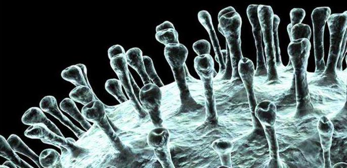 全新的病毒!并非SARS进化版,新型冠状病毒疫苗研发启动,美国流感引发8200人死亡