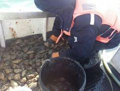獐子岛回复关注函:仍将申请减免海域使用金