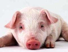 猪价强势翻转再破30元/公斤 消费旺季降至价格还将持续?