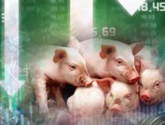 寒冬已至!暴跌60%,生猪价格跌入谷底,协会紧急发声:不要恐...